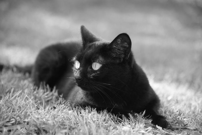 Black Cat Black Cats Cat Cats Cats Photography Catsphotography