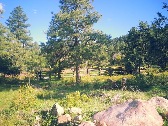 Colorado Day Nature Nature Photography EyeEm Best Shots Nature_collection NaturePhotography🌼 Outdoors Ranch Ranch Life Sky