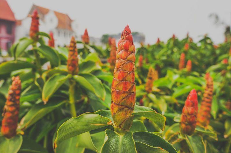 Close-up of fresh orange plant against sky