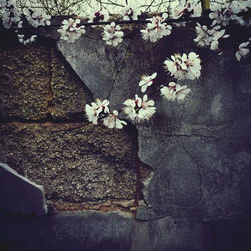 Whispers Of Spring EyeEm Nature Lover EyeEm Best Shots - Nature