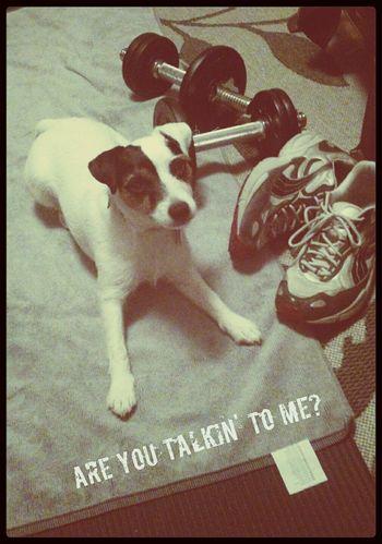 dog de niro (haha!) A Dog's Life Dog Don't Mess With Me