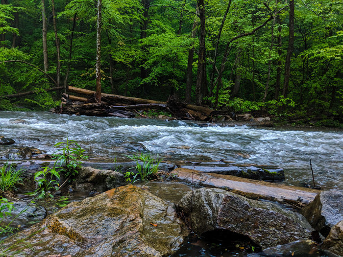 Dunbar Mountains Pennsylvania Tree Water Forest Woods Stream Flowing Water