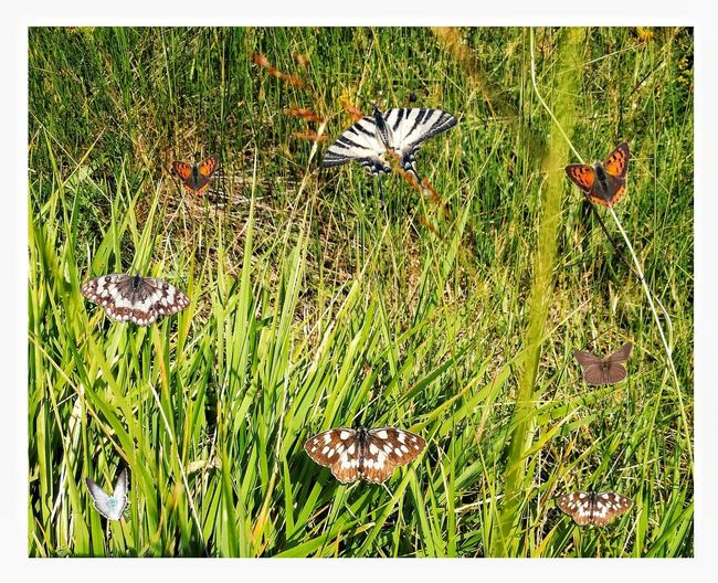 butterflies 10 Flower Full Frame Backgrounds Grass Close-up Plant Butterfly - Insect Animal Antenna Animal Wing