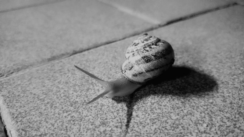 Animal Shell Animal Themes Blackandwhite Lumaca No People Outdoors Pebble Selective Focus Shadow Snail Snail Collection Snail🐌 Tranquility Zoology