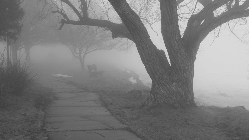 Around The Lake Foggy Morning Very Cool ✌ Alittle Spooky So Quiet Alone Time Love This Place No People Lake Cadillac Pure Michigan
