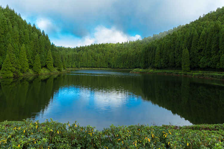 Lagoa das empadadas lake surrounded by green pine forest located on sao miguel, azores, portugal.