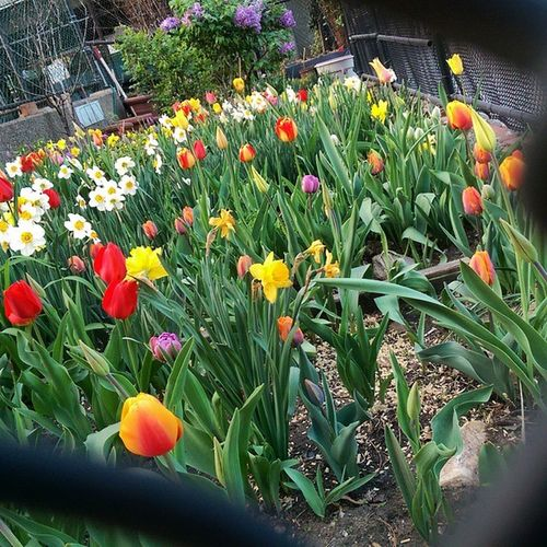 Helloooo gorgeous flower garden on 10th Avenue!!!! Glad to be back and be greeted by all this new life!!!! 😁😁😁 IMissMom but IHeartNYC Spring Springinthecity tulips breathe