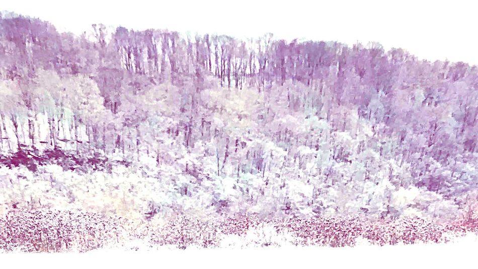 White Album Winterland First Snow Mountainlove