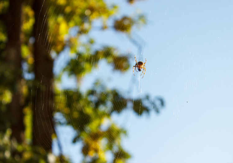 Close-up of spider on a tree