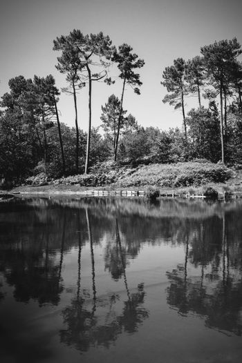 Adventure Black & White Black And White Blackandwhite Blackandwhite Photography Discovering Eye4photography  EyeEm Best Shots EyeEm Nature Lover Forest Nature Nature Nature Photography Nature_collection Nikon Nikonphotography Outdoors Pond Taking Photos Tranquility Tree Walking Around Water Water Reflections