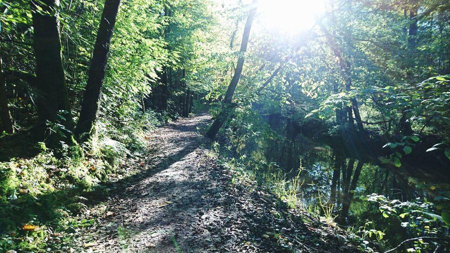 Air full of autumn Outdoors Nature Sunlight Autumn Pathways Riverbank Breathe It In