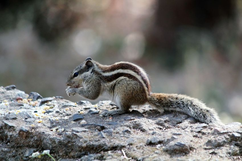 Animals In The Wild Animal Wildlife Nature No People Outdoors Animal Close-up Day Tail Mammal One Animal Animal Themes Nature