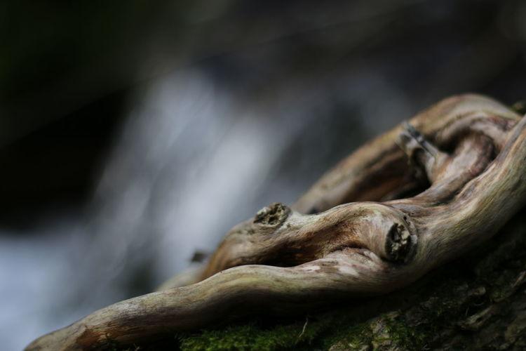 Close-up tree root
