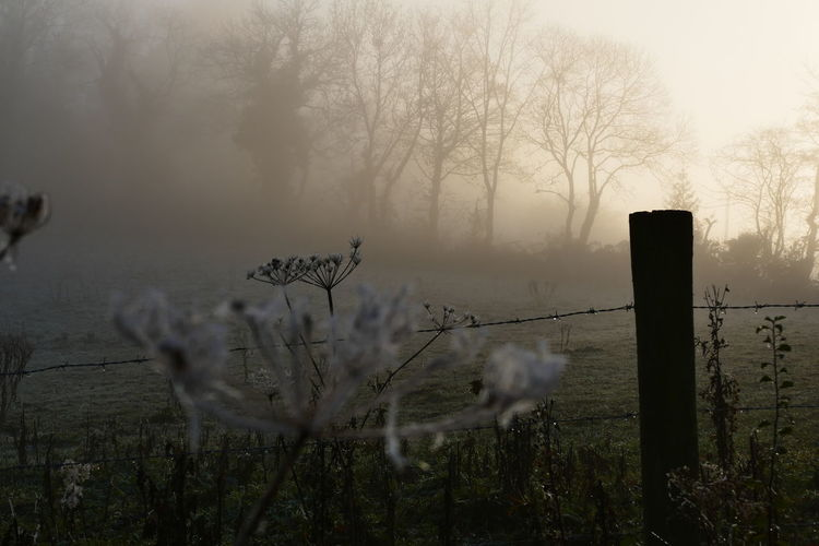Foggy day.. Dream States Ethereal Fog Foggy Foggy Weather Silhouette Silhouette_collection Softness Perspectives On Nature