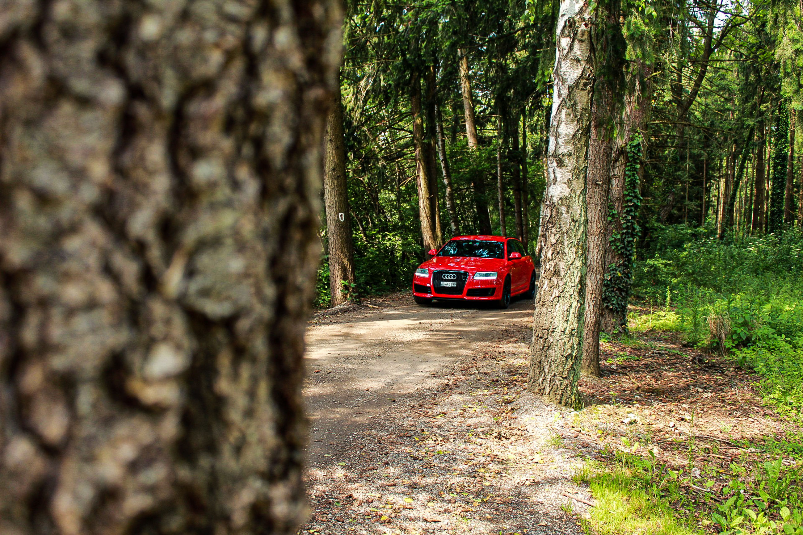 tree, mode of transportation, tree trunk, plant, car, trunk, transportation, motor vehicle, land vehicle, nature, land, forest, day, no people, outdoors, road, woodland, growth, focus on background, selective focus
