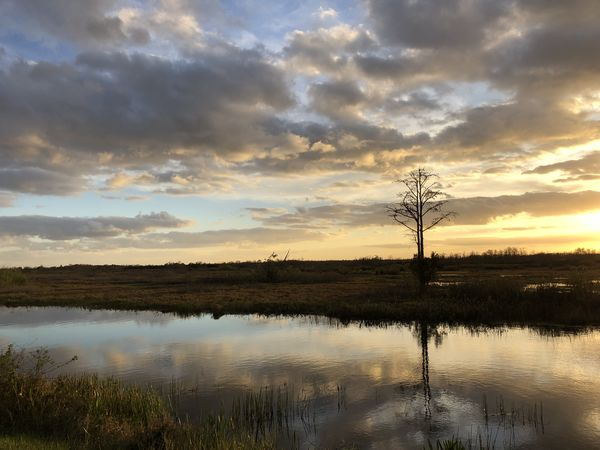 cypress tree and sunset Reflection Swamp Beauty In Nature Cloud - Sky Cypress Trees  Day Lake Landscape Nature No People Outdoors Reflection Scenics Sky Sunset Tranquil Scene Tranquility Tree Water