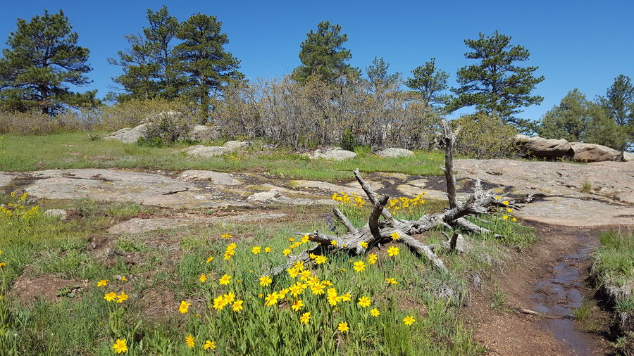 Spring flowers at Castlewood Canyon State Park Wildflowers Spring In Colorado Spring