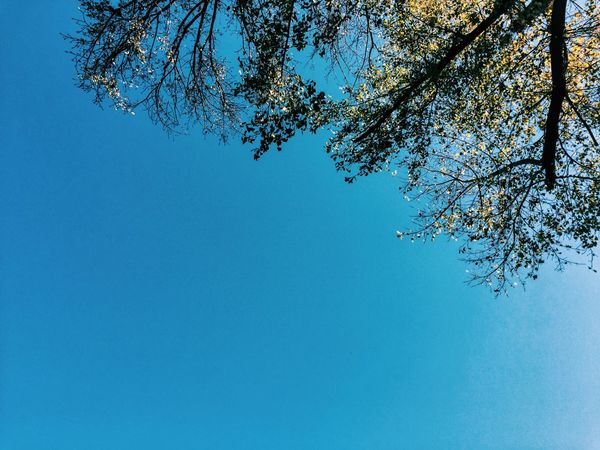 Blue Sky Sky Relaxing Gostivar Vardar IPhoneography Vscocam VSCO Tree Autumn Macedonia The Week On EyeEm Editor's Picks