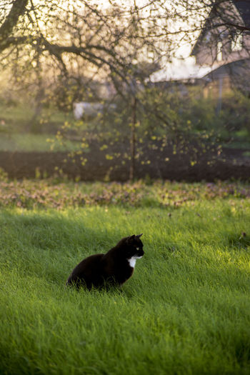Side view of a black cat on field