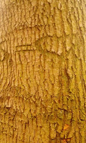 Bäume Outdoors Tree Baumrinde Baum Baumstamm Baum 🌳🌲 Baumrinde Tree Trunk In Deutschland Im Wald Full Frame Textured  Close-up Yellow Textile Hardwood Wood Paneling Abstract Backgrounds Textured Effect