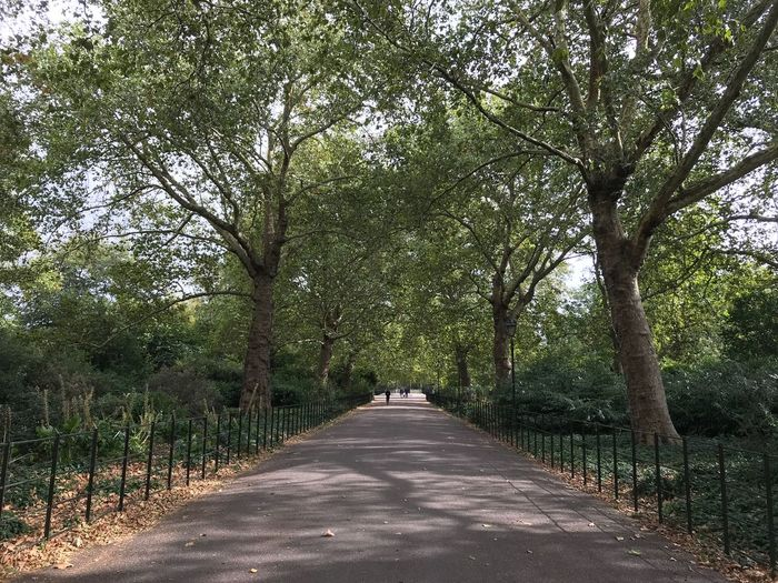 Batterseapark Battersea Uk England London Tree Plant The Way Forward Direction Road Growth Transportation Diminishing Perspective No People Nature Beauty In Nature Sunlight Green Color Tranquil Scene Tranquility vanishing point Outdoors Day Land Shadow