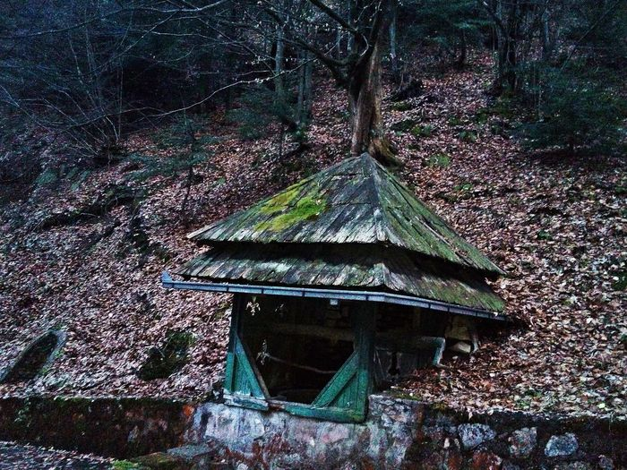 View of old wooden house in forest