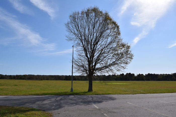 Countryside Landscape Nature No People Outdoors Rural Scene Tree Trunk Lowndes County Alabama Alabama Outdoors