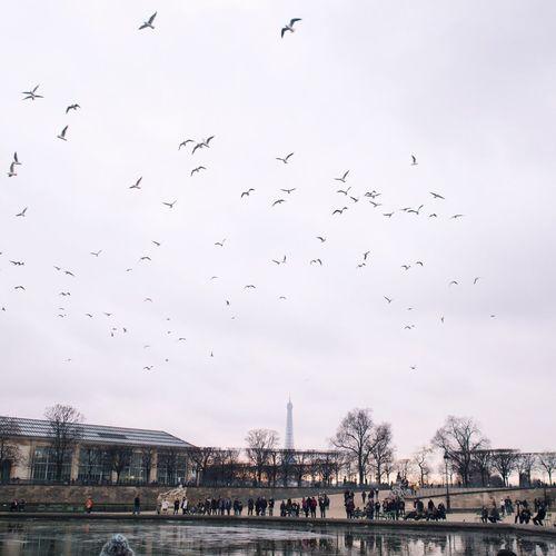 Flock of birds flying over river in city against sky
