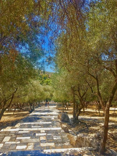 Path Pathway Beauty In Nature Nature Trees Treelined Olive Trees Greece Athens, Greece Outdoors Scenics The Way Forward Marble Path Marbledstone Greece Athens Streetphotography Worldtraveler Traveler Treelovers Europe Olivetrees Treelined Path Pathways Pathway
