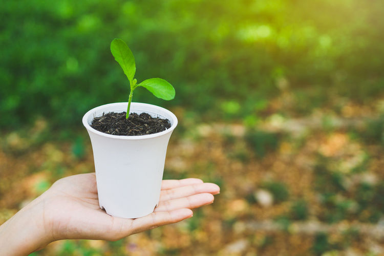 Cropped hand holding plant in cup