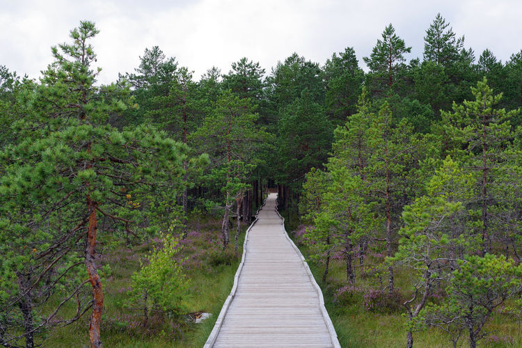 Footbridge amidst trees in forest against sky