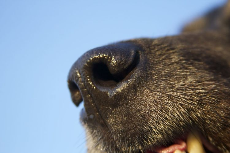 Animal Body Part Animal Head  Animal Nose Animal Themes Close-up Day Dog Domestic Animals Domestic Cat Feline Low Angle View Mammal Nature No People One Animal Outdoors Pets