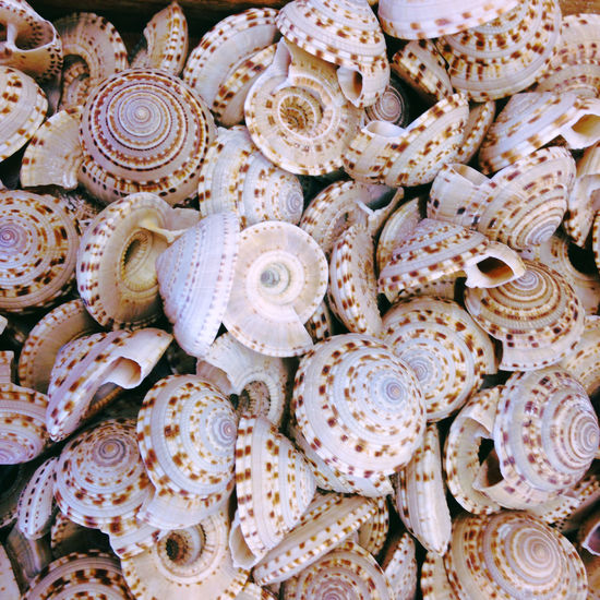 All that shells.... Abundance Background Texture Backgrounds Close-up Collection Detail Filigran Focus On Foreground Full Frame Minimalism Nature Nature_collection No People Pattern Pieces Shell Shells Shellsheddyphotography Sorted Structure Structures Textures And Surfaces Variation Everything In Its Place Nature's Diversities