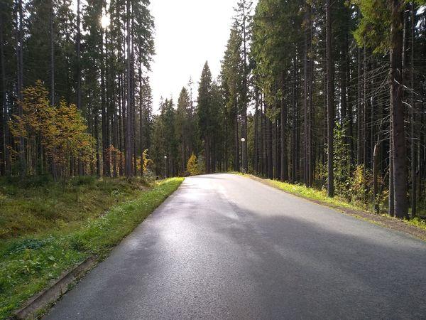 Карелия. Курган. природароссии природнаякрасота красота Природа небо отдых путешествие облака деревья дерево удивительноерядом путь Дорога Tree Road Sky Empty Road Road Marking Country Road