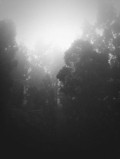 Sukabumi Gununggede Fog Naturephotography after the rain..