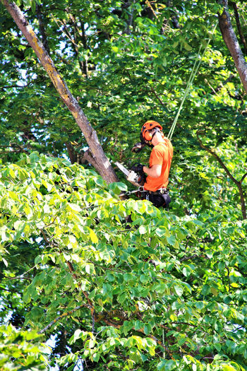 A taste of the Baltics Baltic Baltic Countries Labourer Men At Work  Work Workman Adventure Baltic States Forest Green Color Growth Holding Labour Lifestyles Men Nature One Person Outdoors Plant Protection Real People Rope Safety Tree Workman Safety Equipment