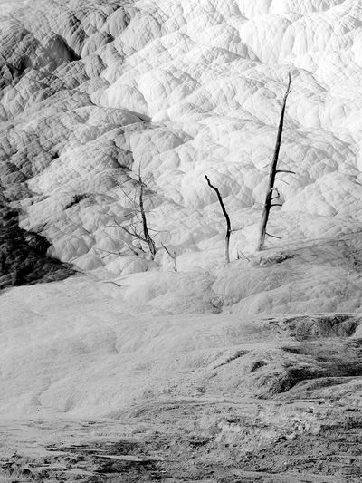 Yellowstone Geothermal  Surreal Landscape Black And White Nature