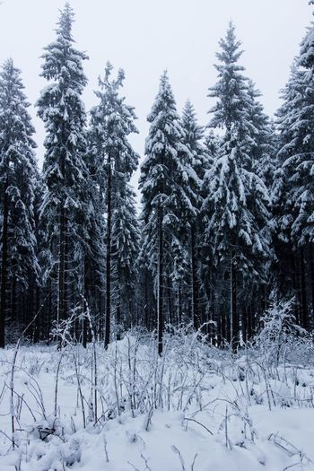 Winter Snow Cold Temperature Nature Weather Tranquil Scene White Color Forest Day Sky Tree Frozen Landscape Outdoors No People Beauty In Nature