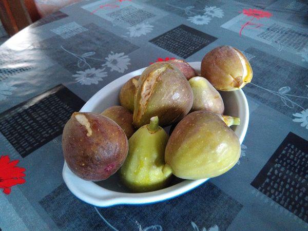 Récolte des figues du jour