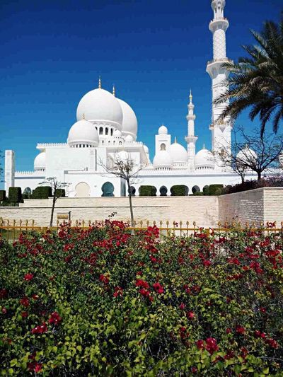 Dome Travel Destinations Place Of Worship Travel Architecture Tomb Cultures Religion City Outdoors Sky Flower No People Day Abudhabi