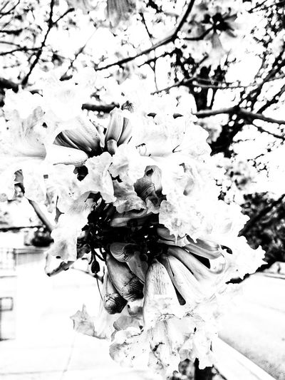 Nature in Black and White Nature Nature Photography Blackandwhite Bnw Springtime Flowers,Plants & Garden Scenics Nature_collection Nature In Black And White