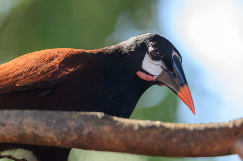 Close-up of bird by branch