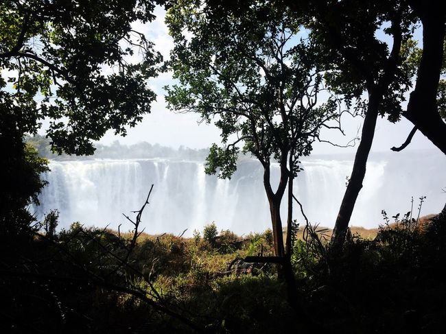 Day Water Branch Scenics Beauty In Nature Growth Nature Plant Non-urban Scene Victoriafalls