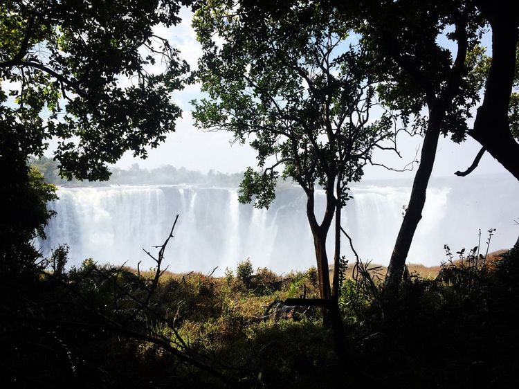 Day Water Branch Scenics Beauty In Nature Growth Nature Plant Non-urban Scene Victoriafalls