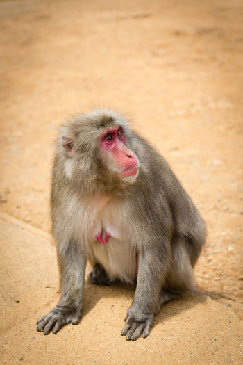 Monkey sitting looking away