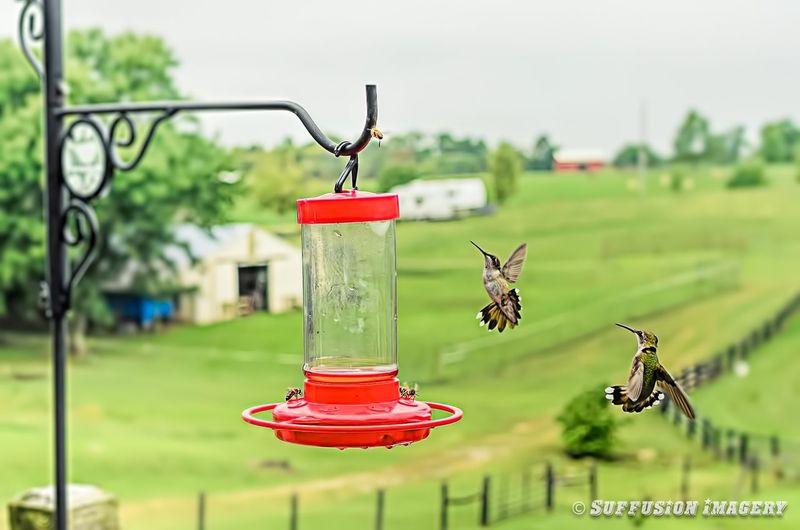Hummingbird Pocket_family Tadaa Community Damn Bees