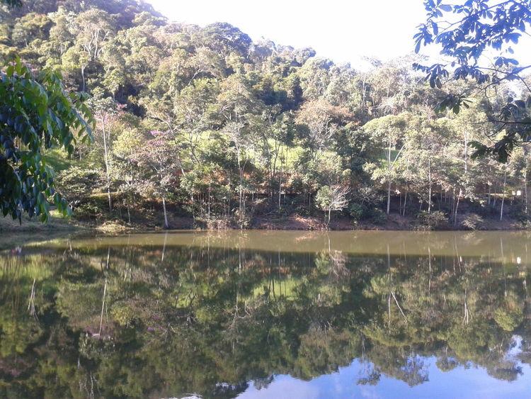 Lake Lake View Naturelovers Reflection_collection Reflexo  Tree And Sky Trees Trees Collection Water Reflections Water_collection