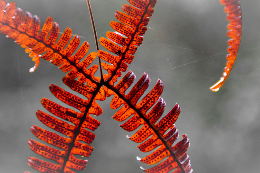 Red Fern Leaf Fern Leaf Pattern Autumn Colors Autumn Colors Seasons Copy Space Love On Christmas December Holidays No People Night Hanging Outdoors Nature Close-up