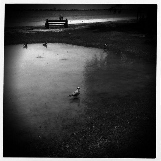 Hide And Seek NEM Submissions NEM Black&white Frame It!