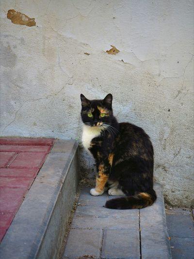 cat Cat Green Eyes Fluffy Animal Little Pet